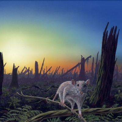 0211 Impact - New Dawn