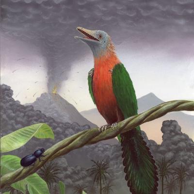 0509 Eoenantiornis Buhleri