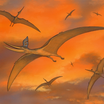 0539 Pterosaurs
