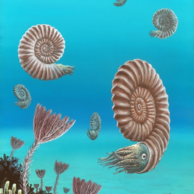 1111 Swimming Ammonites
