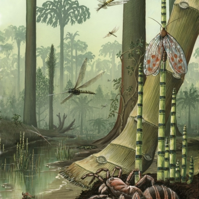 1119 Insects of the Carboniferous